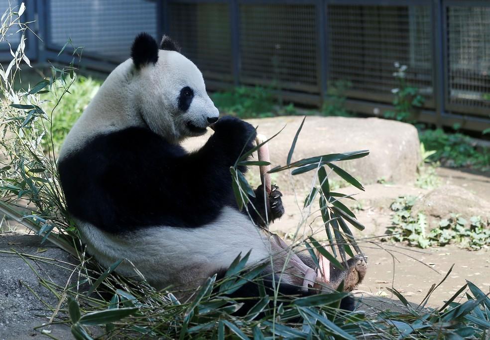 Panda gigante dá à luz filhotes gêmeos em Tóquio  — Foto: Issei Kato/Reuters